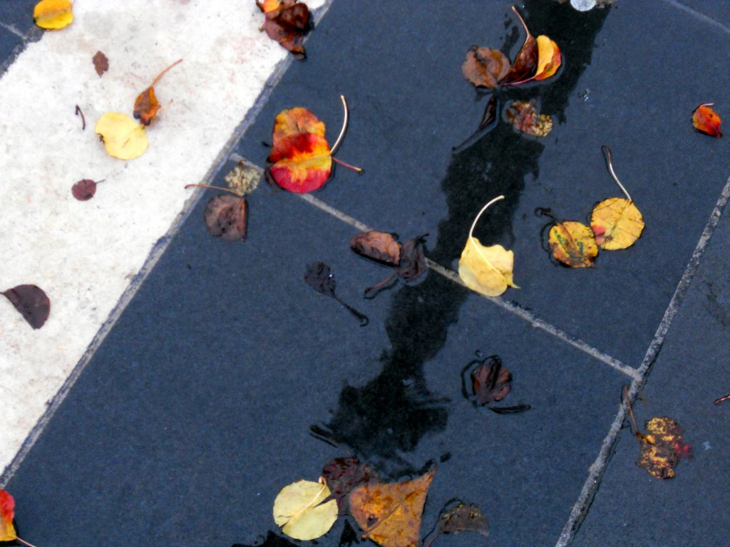 pluies de novembre